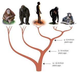 ape-tree